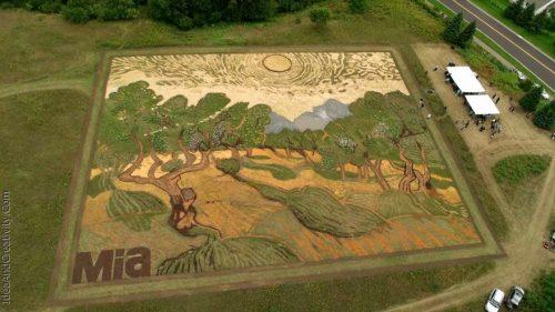 نقاشی ونگوک بر روی مزرعه