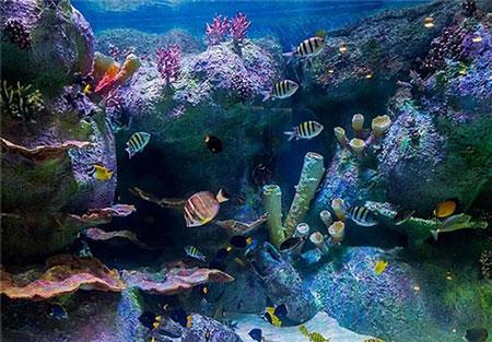 تونل آکواریوم اصفهان, بیش از پنج هزار موجود زنده دریایی را در خود جای داده است