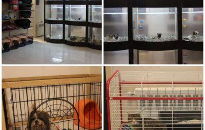 شغلی پولساز و تازه در ایران، پانسیون حیوانات خانگی!