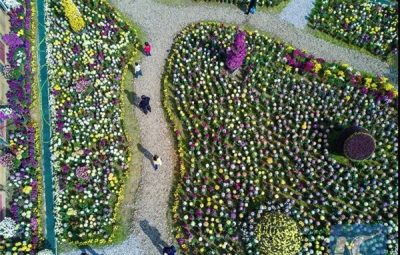 ساخت 2000 باغچه برای مبارزه با آلودگی هوا در چین