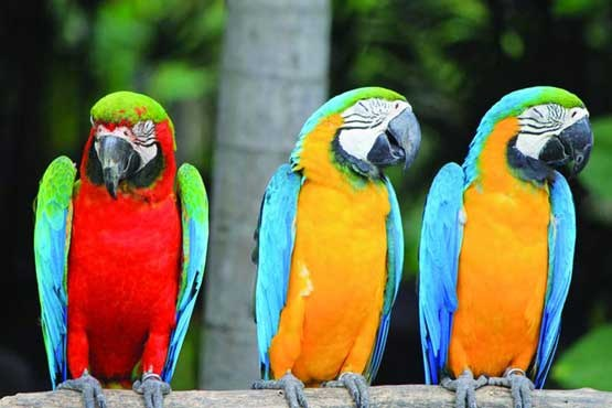 ایده های سرمایه گذاری: پرندگان زینتی خارج از کادر قفس