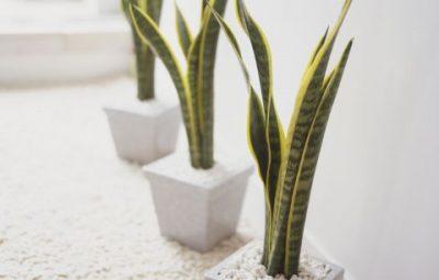ایده برای رفع مشکلات خواب با گیاهان آپارتمانی