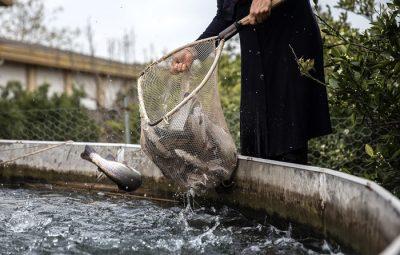 با پرورش ماهی در منزل صاحب درآمد شوید