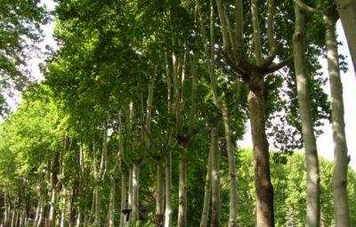 فضای سبز و اهمیت آن در زندگی انسان
